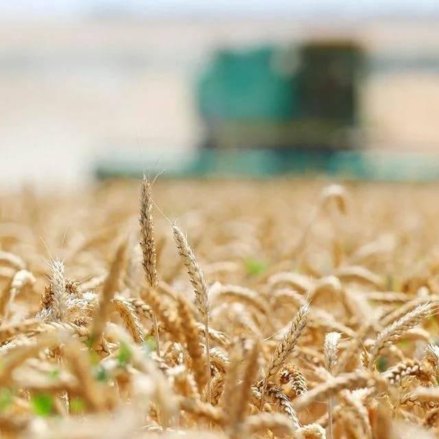 Льготный кредит для начинающих фермеров на развитие кфх в россельхозбанке, сколько денег можно взять